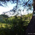 Nove pasove znacenie pod kopcom Vapenistia